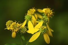 красивые желтые лепестки стоковая фотография