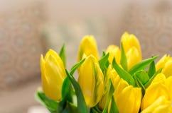 Красивые желтые расплывчатые тюльпаны весны на предпосылке bokeh Стоковая Фотография