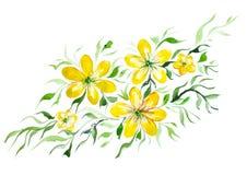 Красивые желтые цветки с листьями Стоковое фото RF