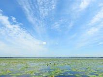 Красивые заводы и облачное небо в озере в лете, Литве Стоковое Изображение