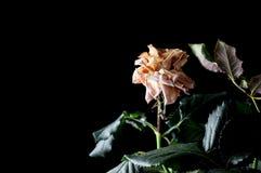 Красивые заводы с душистыми цветками как крытый стоковое фото rf