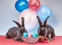 Красивые зайчики около пасхальных яя Стоковые Фотографии RF