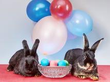 Красивые зайчики около пасхальных яя Стоковое Изображение RF