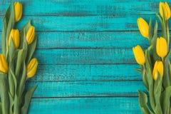 Красивые зацветая желтые тюльпаны на поверхности бирюзы деревянной Стоковые Изображения RF