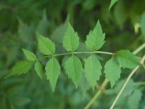 Красивые зеленые листья дерева летом стоковые фото