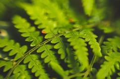 Красивые зеленые листья папоротников на черной предпосылке стоковые фотографии rf