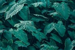 Красивые зеленые лист с низким ключом Стоковое Изображение