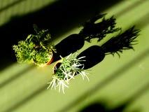 Красивые зеленые маленькие заводы в крупном плане вазы в свете солнца с тенью на предпосылке зеленой таблицы - художественной кон стоковые изображения rf