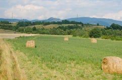 Красивые зеленые поля в природе Стоковая Фотография
