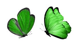 Красивые 2 зеленых бабочки изолированной на белой предпосылке стоковые фотографии rf