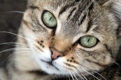 Красивые зеленые глаза кота стоковое изображение