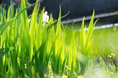 Красивые зеленые листья цветков Картина листьев Стоковая Фотография RF