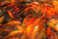 Красивые золотые рыбы Koi Стоковое Фото