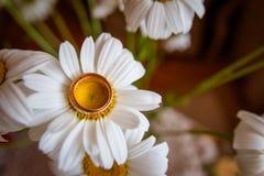 Красивые золотые кольца с цветком Стоковая Фотография