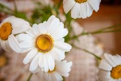 Красивые золотые кольца с цветком Стоковая Фотография RF