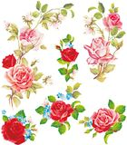 Красивые изолированные цветки на белой предпосылке Комплект различных красивых элементов флористического дизайна Иллюстрация штока
