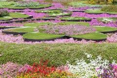 Красивые изумительные цветки сформировали flowerbeds в саде лета стоковое изображение rf
