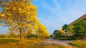 Красивые индийские лилии в улице Стоковые Изображения