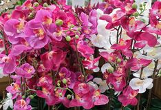 Красивые искусственные исчерченные цветки или фаленопсис орхидеи Стоковые Фотографии RF