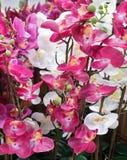 Красивые искусственные исчерченные цветки или фаленопсис орхидеи Стоковое Изображение RF