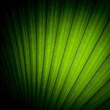 Красивые листья ладони дерева в солнечном свете Стоковое фото RF