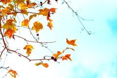 Красивые листья осени и предпосылка неба в сезоне падения, стоковые фото