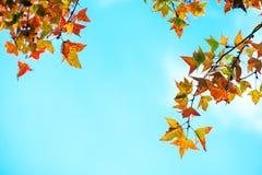 Красивые листья осени и предпосылка неба в сезоне падения стоковое изображение rf