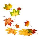 Красивые листья осени падая вниз стоковое фото rf