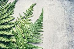 Красивые листья папоротника на серой конкретной предпосылке стоковые фото