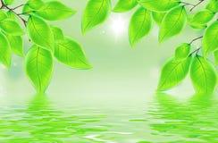 Красивые листья с отражением в воде Стоковые Фотографии RF
