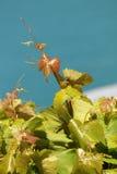 Красивые лист лозы, Стоковое Фото