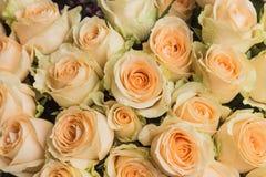 Красивые и душистые розы Стоковое фото RF