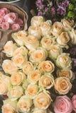 Красивые и душистые розы Стоковые Изображения RF