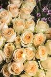 Красивые и душистые розы Стоковые Фото