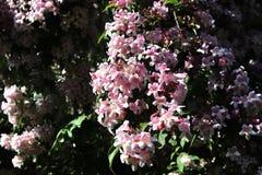 Красивые и красочные цветки весны и лета в немецком саде стоковые фотографии rf
