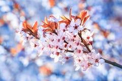 Красивые и яркие цветки лета Стоковые Изображения RF
