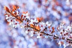 Красивые и яркие цветки лета Стоковые Изображения