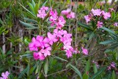 красивые и яркие цветки Стоковое фото RF