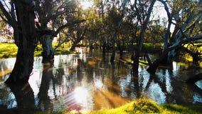 Красивые камеди реки Стоковая Фотография