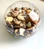 Красивые камни моря в аквариуме, с белыми шариками стоковая фотография rf