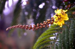 Красивые капельки воды на цветках Стоковое Изображение