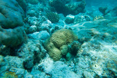 Красивые кораллы Стоковое фото RF