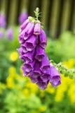 Красивые колоколы которые служат как укрытие для насекомых в холоде Стоковые Фотографии RF