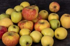 Красивые красные и желтые органические яблоки стоковые изображения