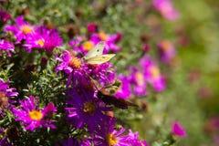 Красивые красные и розовые цветки на зеленой предпосылке Стоковое Фото