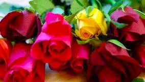 Красивые красные, розовые, желтые и оранжевые розы, макрос крупного плана Стоковое фото RF