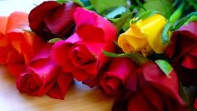 Красивые красные, розовые, желтые и оранжевые розы, макрос крупного плана Стоковые Фото
