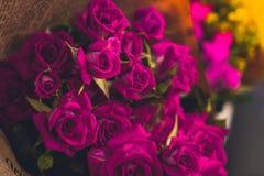 Красивые красные розы крови с старым винтажным влиянием для предпосылки Стоковые Фото
