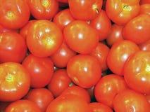 красивые красные свежие томаты, конец вверх, земледелие экологически дружелюбное, полезно стоковая фотография rf