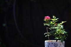 Красивые красные цветки в acient городе стоковые фотографии rf
